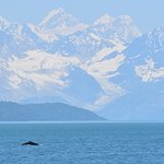 Humpback from Boat