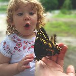 Butterfly Center with up close opportunities (seasonal).