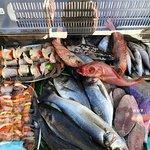 fish in case