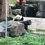 Say hi to panda!
