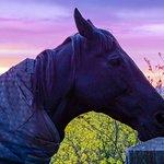 Sonnenuntergang mit einem der Pferde