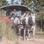 Wine Tasting with a difference! Ride between two boutique wine estates at the foot of the Tsitsikamma Mountains in a vintage horse drawn carriage.  Enjoy sparkling wine on arrival, an informative tour, taste 2 wines, olives, olive oil, bread and Honeybush Iced Tea and a cellar tour before boarding carriage for return journey.