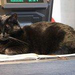 Photo of Cat-Cafe Nurri