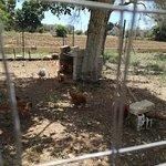 Agriturismo Le Tagliate照片
