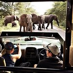 Kruger Pride Safaris
