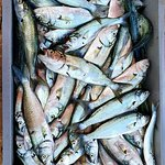 Fresh Black Sea Fish