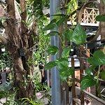Rainforest照片