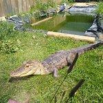Critchlow Alligator Sanctuary – fotografija