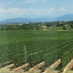 The view from the wine-tasting room