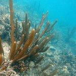 Deep World Diving