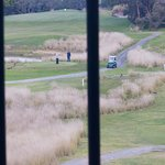Golfers and Kangaroos share the greens