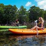 Safari And Surf