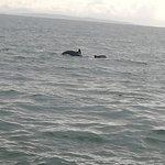 Dolphinwatch照片