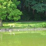 Maria Hendrikapark met watervogels