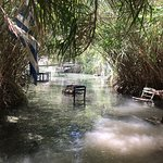 Jungle of Rhodes Photo