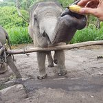 Chiang Mai Elephant Sanctuary Image