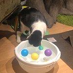 ภาพถ่ายของ Lady Dinah's Cat Emporium