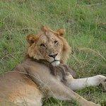 Palm & Acacia Safaris照片