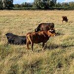 Découverte des chevaux, des taureaux et des rizières...