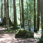 The hiking path going to Nooksack Falls.