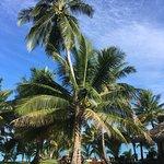 tamanu beach resort