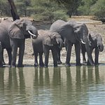 Elephant family at watering hole in Tanagire National Park