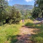 Corfu forest walk