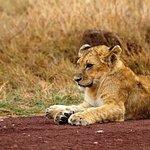 Escursioni Kenya Peperone
