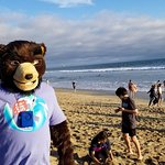 Joe Bear on the beach at Bolsa Chica (Near 'The Habit' - Huntington Beach)