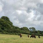The happy horses