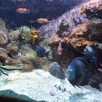 Caribbean aquarium in the Monaco Oceanographic Museum