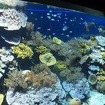 Coral reef in the Monaco Oceanographic Museum