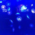 Jellyfish aquarium in the Monaco Oceanographic Museum