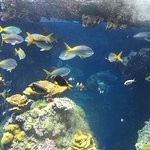 An aquarium in the Monaco Oceanographic Museum