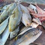 Bottom fishing> Snapper,Amber Jack, Barracuda