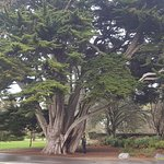 Winter picture from Christchurch Botanic Gardens