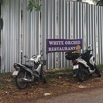 ภาพถ่ายของ White Orchid