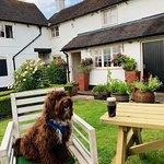Dog friendly pub.