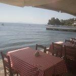 ZORBAS Restaurant - Cafe : Fresh squid in virgin olive oil - heavenly!