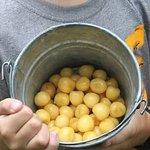 Gold Cherries