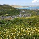 Blooming yellow daisies, curse of Delos