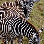 Cratere Ngorongoro