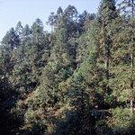 Kiefernwälder an entlegeneren Stellen