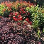 Breezy Knees Gardens Resmi