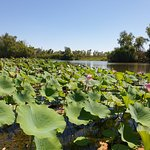 Wetland Cruises - Corroboree Billabong