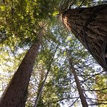 Treetops walk Rotorua