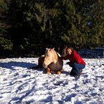 'Roxy' arrived in the middle of winter... to become part of our family... What a sweet horse!