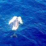 Eine tolle Walsafari mit dem erfahrenen Kapitän von Sea Qest Sailing - tolle Aufnahmen bei der Walverfolgung mit der Drohne. Siehe YouTube suche: Alfons Nassal - Viel Spaß und Gruß an den Hafen von Adeje