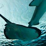 Valokuva: Ripley's Aquarium of Canada