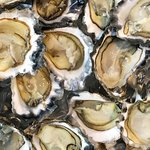 Sydney Rock oysters, grown locally in the Tweed river